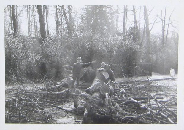 A black and white picture showing a young boy smiling and holding his left hand out whilst standing amongst felled trees and branches in a park. An older man leans against a fallen trunk by the boys outstretched hand