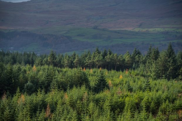 Conifer forest beneath hills.