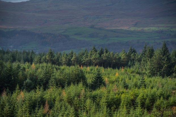 Conifer forest beneath hills.