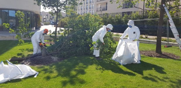 Three people in white jumpsuits and facemasks are working in a park surrounded by buildings. One is cutting down the tree with a chainsaw whilst the others are clearing the remains of the tree into a large white bag.