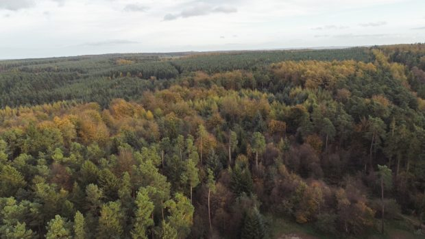 Ariel shot of Dalby Forest