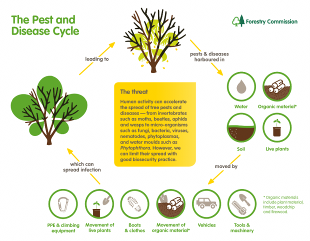 The pests and diseases cycle from the materials they are harboured in, leading to how they are moved, to their spread to healthy trees leading to diseased trees and the cycle starts again from that diseased tree.
