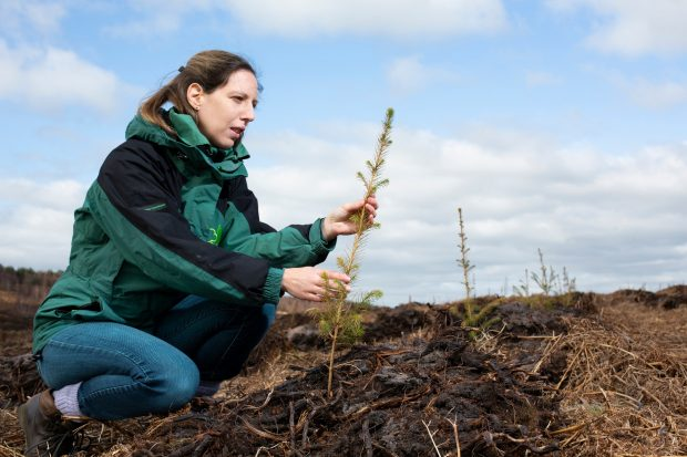 A woman wearing blue jeans and a green and black coat crouching down in a newly planted field holding a young conifer tree