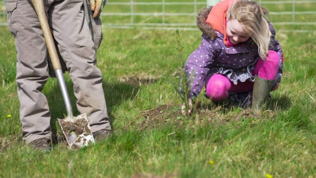 A child planting a conifer tree