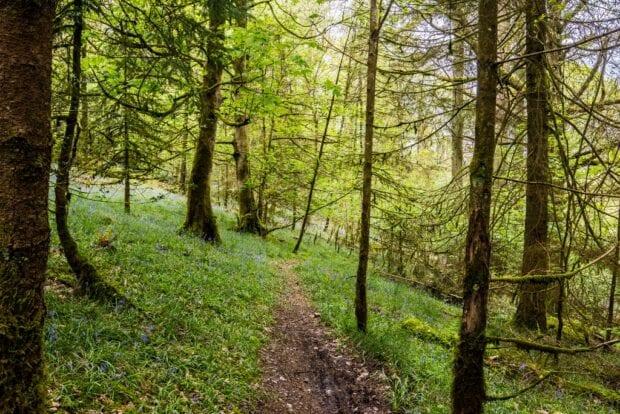 A path through a dense woodland
