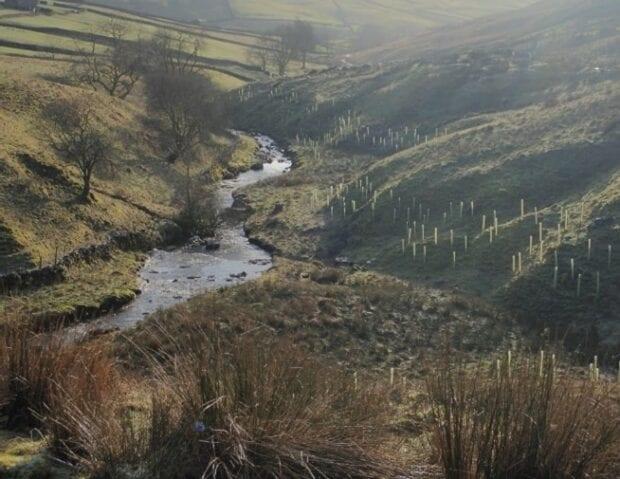 Trees planted alongside a river