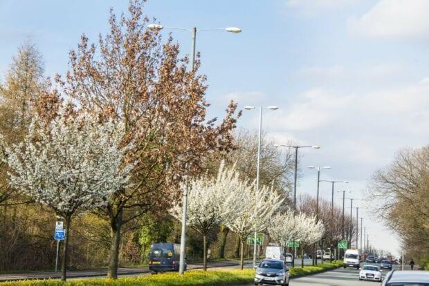 Trees along a busy main road