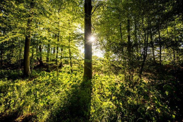 Sunlight shines through trees into a dense wood
